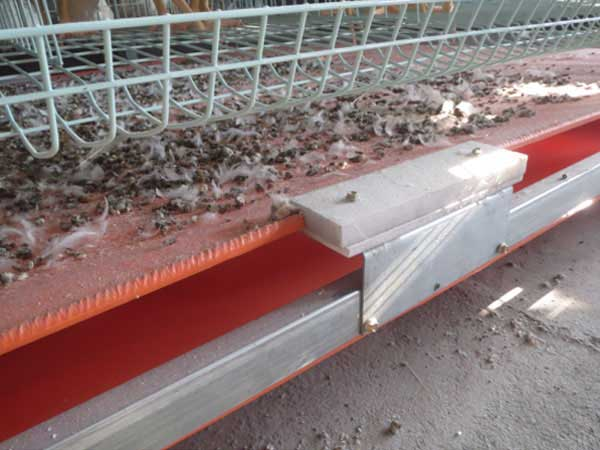 Conveyor type manure removal system for chicken cage