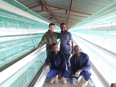 Delivers 80 sets Layer Battery Chicken Cage to Uganda