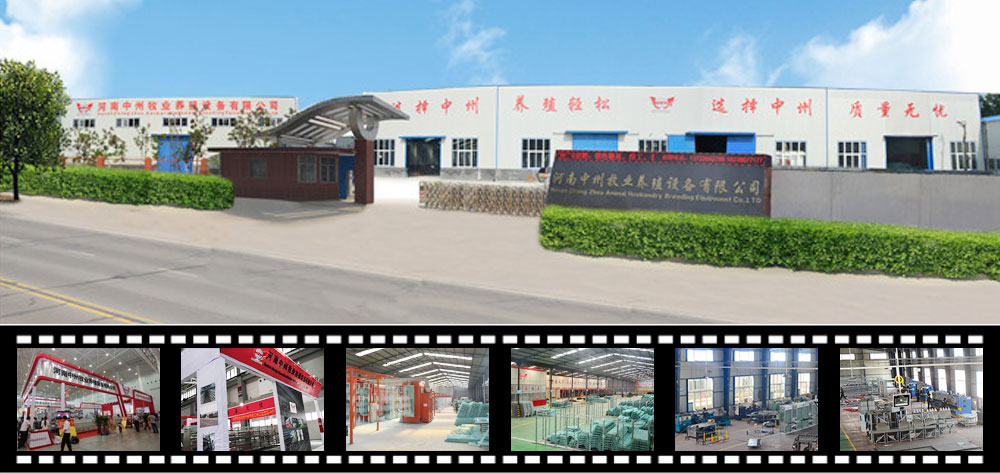 chicken cage system, poultry farm equipment, Egg and broiler production