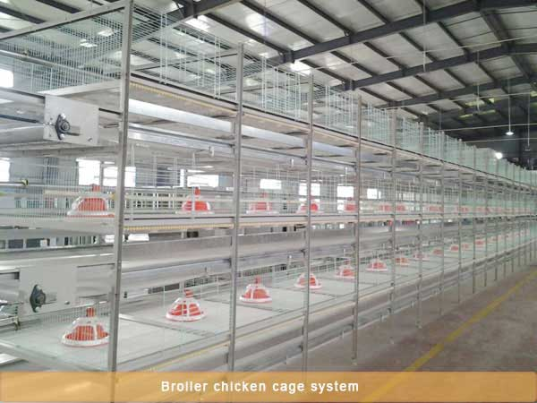 Broiler chicken battery cage system