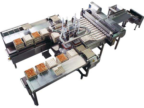 Poultry egg grading packing machine