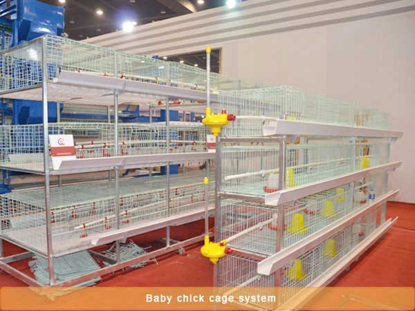 Baby chick cage system
